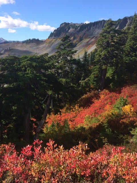 Huckleberry Autumn Colour